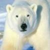 Animale Ursi  152