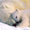Animale Ursi  179
