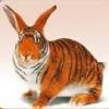 Animale Diverse 61