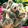 Animale Ursi  1185