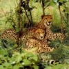 Animale Diverse 137