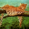 Animale Diverse  151