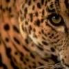 Animale Diverse 173