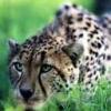 Animale Diverse 210