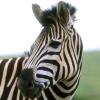 Animale Diverse  28