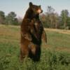 Animale Ursi  719