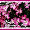 Sarbatori Valentine's day  9663